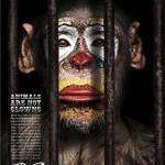 Los animales no son payasos. Animales de circo, no formes parte del show