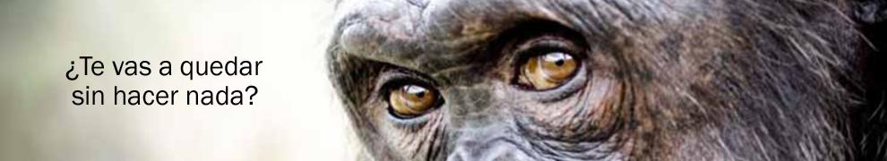 Antena3 pasa del sufrimiento animal