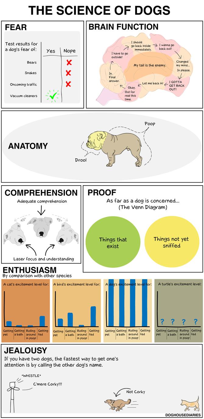 cómo funciona el cerebro del perro