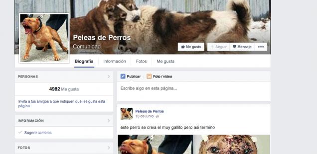 página en Facebook sobre peleas de perros